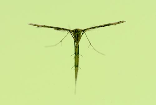 Bug20150624_3