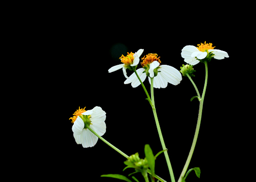 Flowers20150902_144