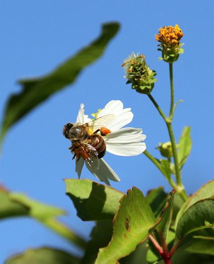 BeeFlower20151014_32
