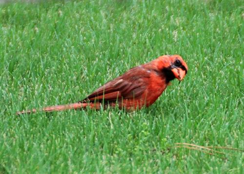 Cardinal20160808_20