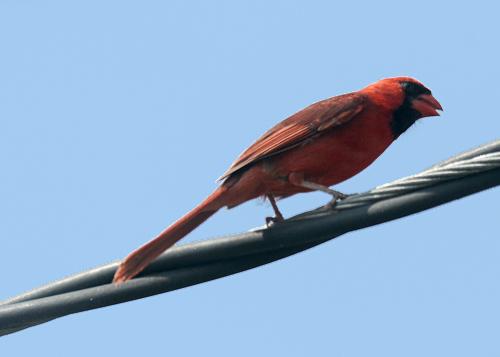 Cardinal20170428_48